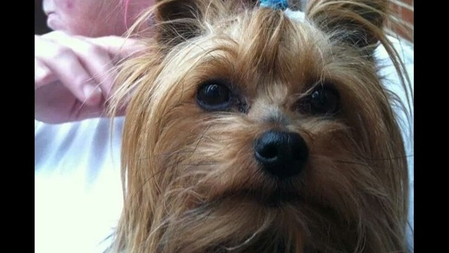 Rockford Woman Needs Stateline Help Finding Her Dog