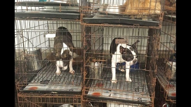 Governor Quinn Announces Support for Puppy Mill Ban