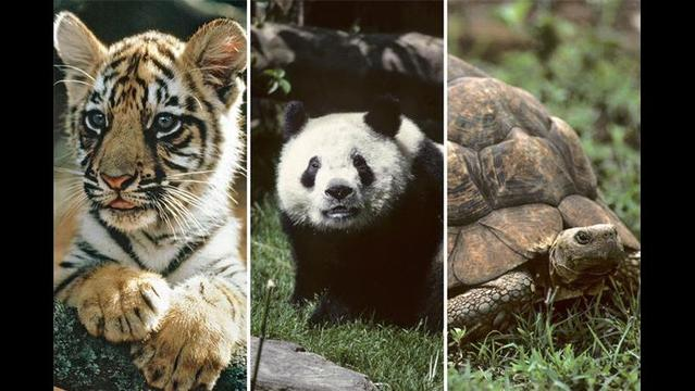 'Wild and Precious' exhibit marks the first World Wildlife Day