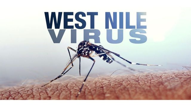 More West Nile virus-carrying mosquitoes found in Salt Lake County