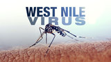 1st West Nile virus-positive mosquitoes found in Illinois