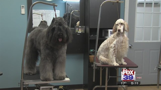local trainers to show dogs at westminster kennel club dog show